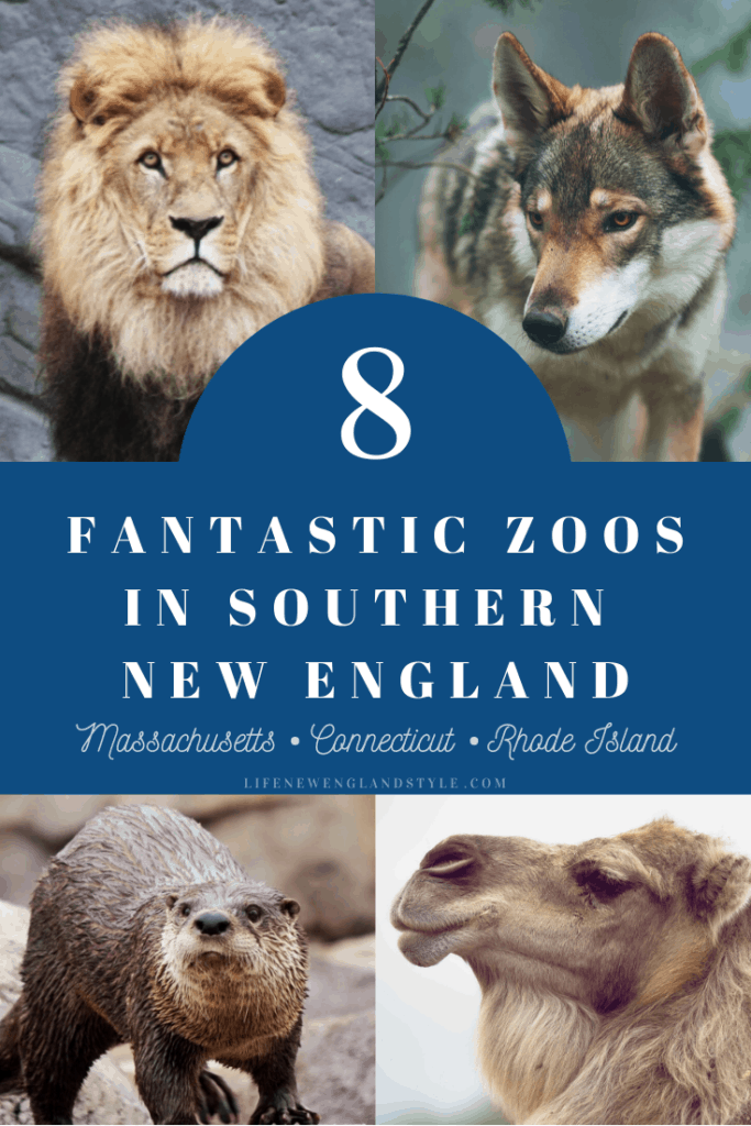 Zoos in New England - We are lucky to have 8 great zoos in Southern New England and the best part is that none of them are all that far away since Massachusetts, Connecticut, and Rhode Island are such small states. #zoosinnewengland #newenglandzoos #southernnewenglandzoos #new england #southernnewengland #connecticut #massachusetts #rhodeisland #thingstodoinmassachusetts #thingstodoinma #thingstodoinconnecticut #thingstodoinct #thingstodoinrrhodeisland #thingstodoinri #lifenewenglandstyle @lifenestyle